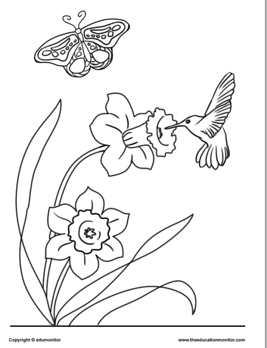 coloring pages springtime flower edumonitor