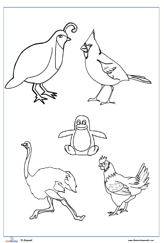 edumonitorbirds